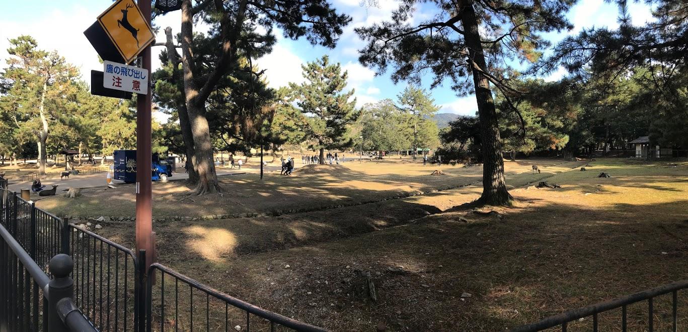 奈良公園餵鹿