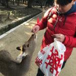 網站熱門文章:【奈良一日遊】奈良公園餵鹿、中谷堂艾草麻糬,會敬禮的鹿兒有仙貝