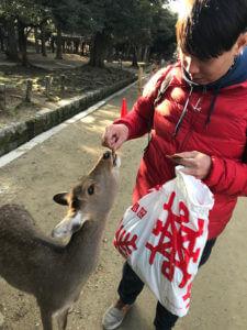 【奈良一日遊、美食】奈良公園餵鹿、中谷堂艾草麻糬,會敬禮的鹿兒有仙貝 @秤秤樂遊遊