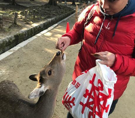 【奈良一日遊、美食】奈良公園餵鹿、中谷堂艾草麻糬,會敬禮的鹿兒有仙貝 @秤瓶樂遊遊
